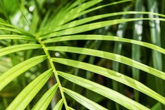Yellow palm or green tropical leaves with sunlight background. For design work Royalty Free Stock Photo