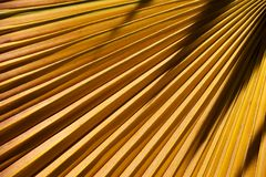 Yellow palm leaf. Royalty Free Stock Photo