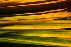 Yellow palm tree leafs in the Stock Photos