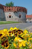 Yellow pansies and the Wawel castle walls. Yellow pansies and the Wawel castle walls in Crakow Royalty Free Stock Images