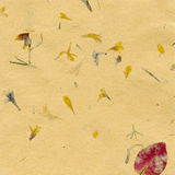 Yellow paper background. With dried plant Stock Photography