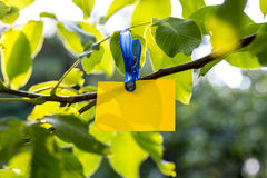Yellow paper card hanging from a fresh green tree branch Stock Photo
