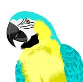 Yellow parrot Stock Image