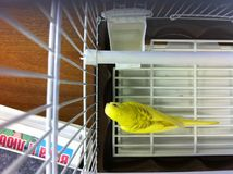 Yellow parrot Stock Photography