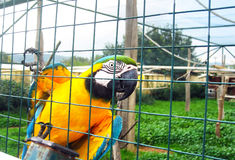 Yellow parrot in the zoo Royalty Free Stock Photography
