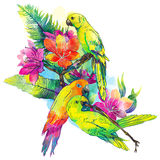 Yellow parrots and exotic flowers. The yellow parrots and exotic flowers on a white background Stock Photography