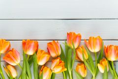 Yellow pastels color tulips on yellow background stock images