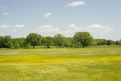 Yellow Pasture. Rural pasture with white and yellow flowers royalty free stock photos