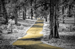 Yellow path along the Grand Canyon in infrared. Path along the Grand Canyon in infrared stock photography