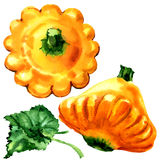 Yellow pattypan, baby summer squash with leaf isolated, watercolor illustration on white Stock Photography
