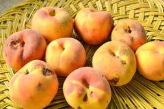 Yellow peach harvest Royalty Free Stock Photos