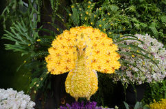 Yellow Peacock Flower made Stock Photo