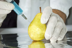 Yellow pear in genetic engineering laboratory Stock Photography