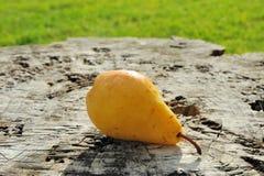 Yellow pear on log Stock Photos