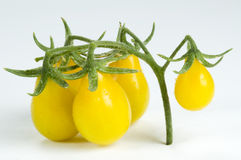 Yellow pear tomatoes royalty free stock image