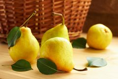Fresh pears with green leaves in front of wattled basket on wooden background. Yellow pears with green leaves laying on wooden table in front of wattled basket royalty free stock photos