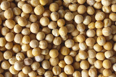Yellow peas. Raw yellow peas background full frame Royalty Free Stock Photography