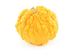 Yellow pebbled skin squash. Stock Images