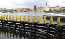 Yellow penguins Praque. Statue yellow penguins  by river in Praque Stock Photos
