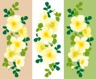 Yellow Peony Royalty Free Stock Photography
