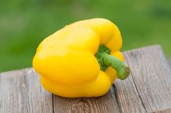 Yellow pepper closeup, paprika on green nature background. Outdoor Royalty Free Stock Images