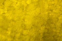 Yellow pepper under the microscope Royalty Free Stock Images