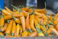 Yellow peppers Royalty Free Stock Photo