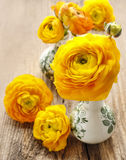 Yellow persian buttercup flowers (ranunculus) on wood Stock Photography