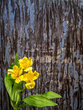 Yellow Peruvian lily with copy space Stock Photo