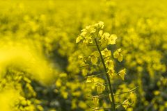 Yellow Petal Flowers stock photo