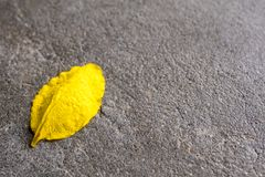 Yellow Petal of Golden shower flower on the concrete floor. Yellow Petal of Golden shower & x28;Ratchaphruek& x29; flower on the concrete floor stock photography