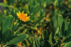 Yellow Petaled Flower Stock Photography