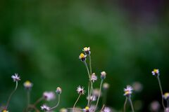 Yellow Petaled Flower Blooming during Daytime Royalty Free Stock Photos