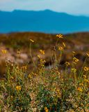 Yellow Petaled Flowers royalty free stock images