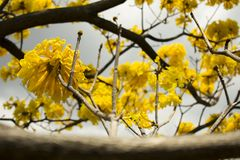 Yellow Petaled Flowers stock photography