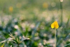 Yellow Petaled Flowers Royalty Free Stock Photos