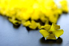 Yellow petals Stock Photography