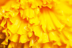 Yellow petals background. Abstract background image of yellow flower petals Royalty Free Stock Photography