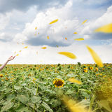 Yellow petals flying in the wind Royalty Free Stock Image