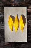 Yellow Petals on Old Paper Stock Images