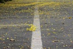 Yellow petals Royalty Free Stock Photos