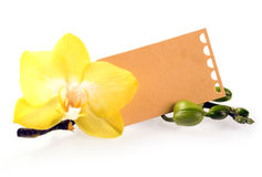 Yellow phalaenopsis orchid with a gift label Royalty Free Stock Image