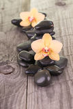 Yellow Phalaenopsis orchids and black stones Royalty Free Stock Photos