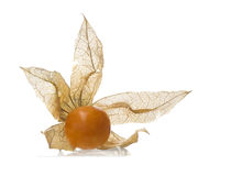 Yellow Physalis fruit, isolated on white Royalty Free Stock Photos