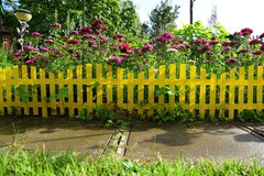 Yellow picket fence with pretty flowers in a yard royalty free stock photography