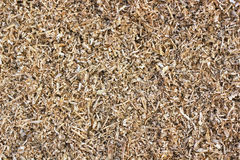 Yellow pine sawdust Royalty Free Stock Images