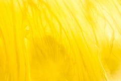 Yellow Pineapple Closeup Stock Image