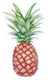 Yellow Pineapple Royalty Free Stock Photo
