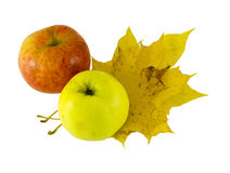 Yellow pink apple lying next yellow maple leaves Royalty Free Stock Photography