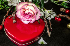 Yellow from pinkedged rose with red box heart Royalty Free Stock Photo